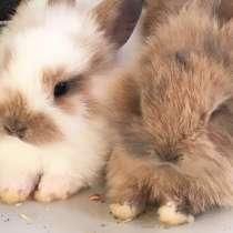 Крольчата декоративные, в Туле