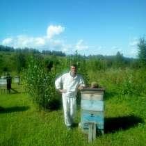 Продам пчёлопакеты, в Барнауле
