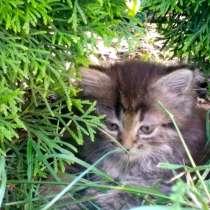 Котята 2 месяца, в г.Брест