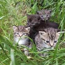 Котята ищут дом и любящих хозяев, в г.Брест