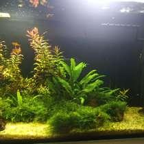 Продам аквариум со всем наполнением, в Воронеже