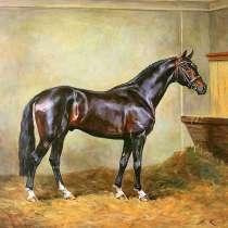 КК-72 гранула для спортивных и работающих лошадей, в Железнодорожном