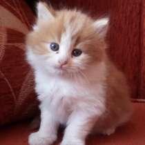 Отдам котят в хорошие руки, в г.Барановичи