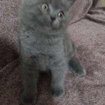 Котята, в г.Кармиэль