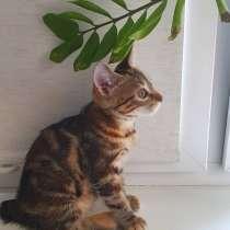Продажа котят породы Курильский бобтейл, в Саранске