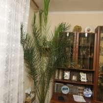 Пальма, в Твери