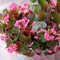 Комнатные цветы, в Абакане