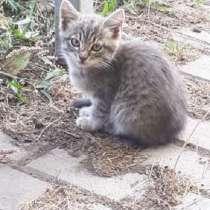 Котёнок-охотник, в Новомосковске