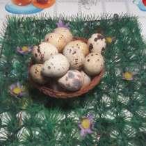 Перепела несушки, инкубационное и пищевое яйцо, мясо-тушки, в Тольятти