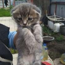 Отдам котят в хорошие руки, в г.Донецк
