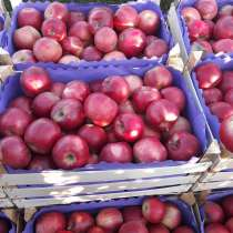 Яблоки все сорта. Соки прямого отжима, в г.Кишинёв
