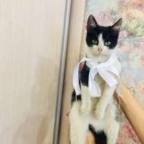Котёнок, в Аксае