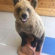Чучело медведя, в Перми