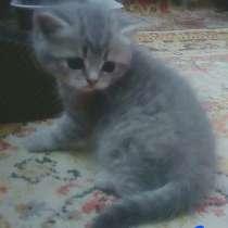 Котята 2 месяца, в г.Орша