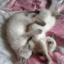 Шикарный котёнок!, в Чебоксарах