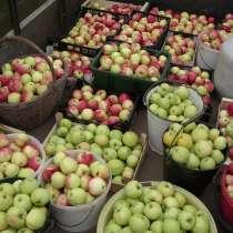 Яблоки и Ранетки, в Оренбурге