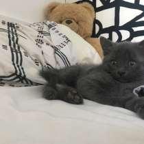 Кошечка ищет своих хозяев !, в Жуковском
