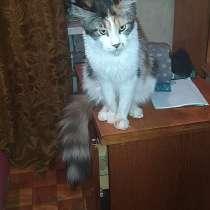 Продам кошку мейнкун, в Сарапуле