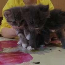 Котята, в Брянске