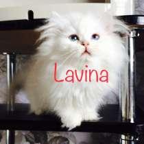 Голубоглазый котенок, в Самаре