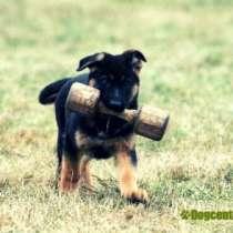 Дрессировка собак, в Чите