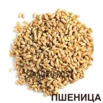 Пшеница 3,5 класс, в Казани