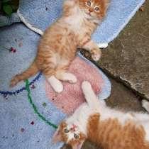 Отдам в добрые руки котиков-рыжиков, в Армавире