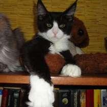 Котята мейн кун из питомника, в Новосибирске
