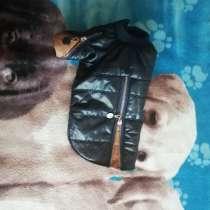 Одежда для собак, в г.Минск