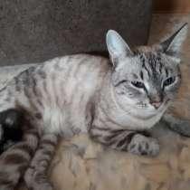 Кот ищет дом, в Кемерове