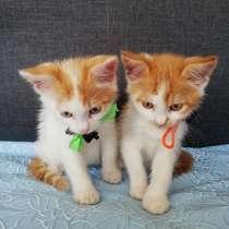 Умные котята ищут дом, в г.Борисов