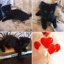 Чёрный котёнок, в Краснодаре