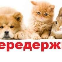 Занимаюсь передержкой животных. Выгул Уход Лечение, в г.Бишкек