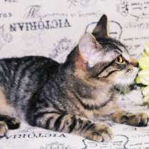 Котенок, в Мытищи