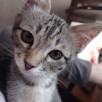 Продам бенгальского котенка, в Перми