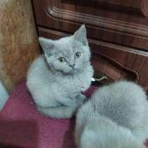Отдам двух котят в хорошие руки, в г.Запорожье