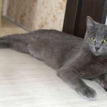 Красивая кошка Вита в добрые руки, в г.Минск
