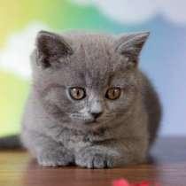 Продажа котят, в Иркутске