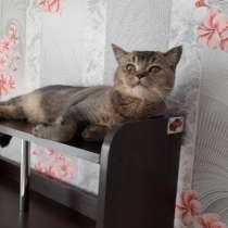 Продам котенка, в Сургуте