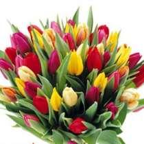 Продаю тюльпаны, в Екатеринбурге