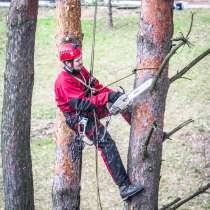 Вам нужно спилить дерево с помощью альпинистов?, в г.Минск
