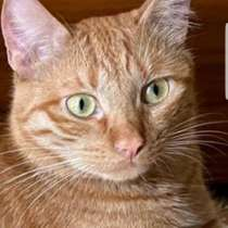 Золотой осенью золотой кот ищет дом, в Москве