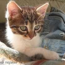 Котята Севастополь. Прекрасная девочка в добрые руки!, в Севастополе