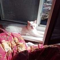 Ищу кошку для кота, в г.Тбилиси