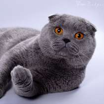 Продаю красивого доброго умного кота оскара, в г.Кременная