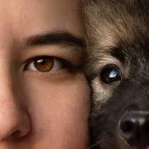 Великолепные щенки немецкого вольфшпица. (Кеесхонд), в Крымске