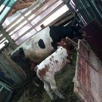 Vadand o vacă, в г.Арад