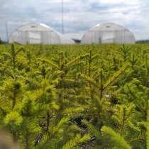 Теплицы и оборудование для лесовосстановления, в Москве