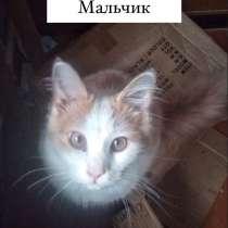 Кошки ищут дом, в Кольчугине