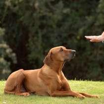 Дрессировка собак, в г.Алматы